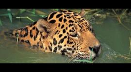 Pantanal, Brazili?. Grootste wetland ter wereld